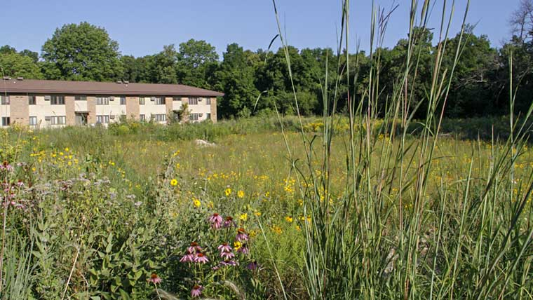 Field with wildflowers behind University of Wisconsin building