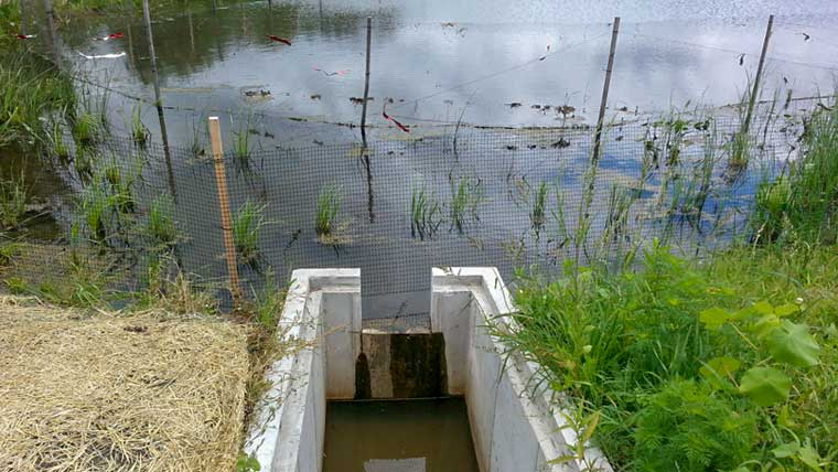 Stormwater flowing into pond at University of Wisconsin