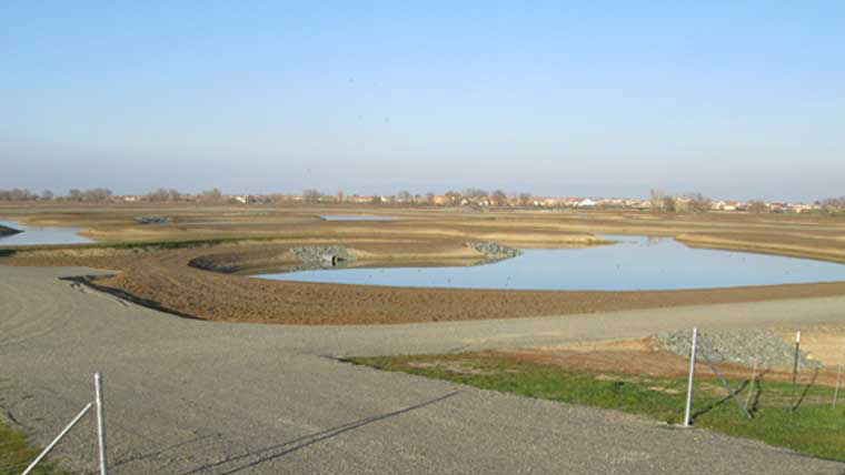 Natomas levee and surrounding environment