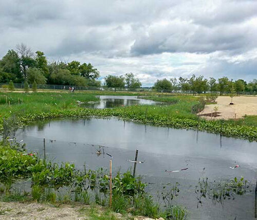 Naturalized wet detention pond at University of Wisconsin